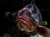 LipStick Fish