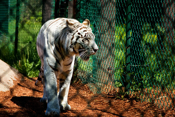 Zoos & Habitats
