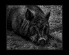 """Eye Of The Bacon"" by Warren J. Ayer, Jr. in York, Maine"