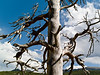 Dead Tree: Hiking Bear and Bierstadt Lakes, Rocky Mountain NP