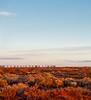 South Australian Outback