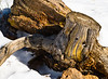 Rock and Stump: Mount Falcon Park, Jefferson County, CO