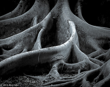 roots_002-3