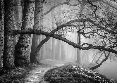 Bavarian Forest Fog