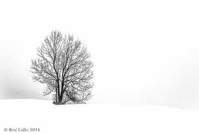 White-Out