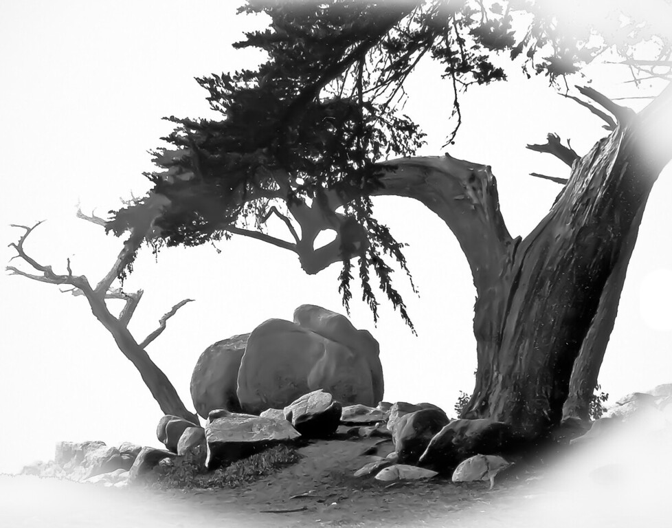 "<center><h2>' Cyprus in Fog '</h2> Carmel, CA  Matted 16""x20 on   Luster Photo paper (12 mil) </center>"