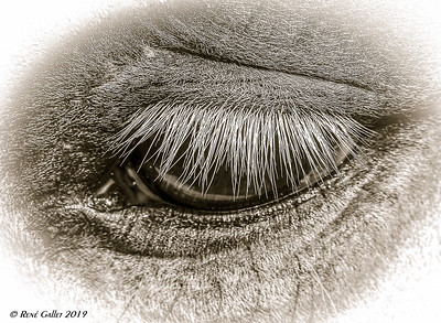 EYE of Mare