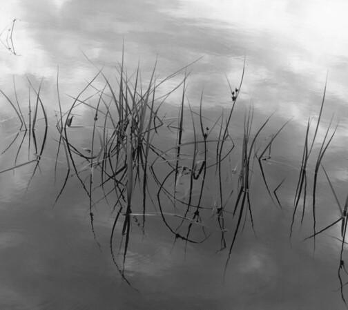 <center><h2>'Harbor Reeds'</h2>Moss Landing, CA</center>