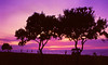 <center><h2>'Coronado Sunset'</h2> San Diego, CA 1988</center>