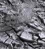 <center><h2>'Desert Flower on the Mud Flats'</h2> Death Valley, CA</center>