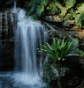 <center><h2>'Tropical Falls'</h2>Quail Garden, Encinitas, CA (color)</center>