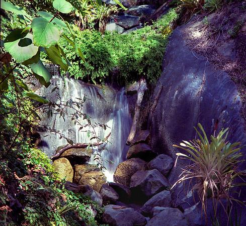 <center><h2>'Tropical Garden'</h2> Quail Gardens -- Encinitas, CA <em>color</em></center>