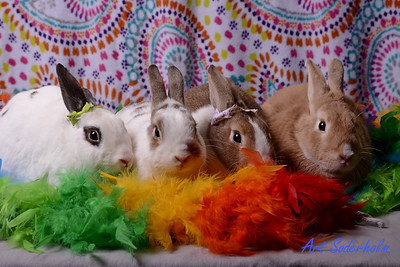 Rabit Rescue Studio Shoot