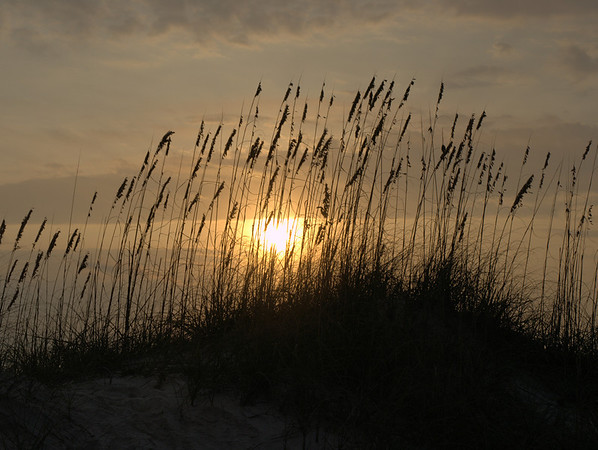 "<center><h2>""Sea Oats at Dawn"" </h2>St Augustine Beach, FL  A  Limiited edition of 50 12""x16"" image on 13""x19"" paper</center>"