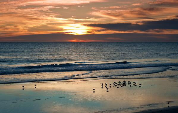 <center><h2>'Morning Feeding'</h2> St Augustine Beach, FL  </center>