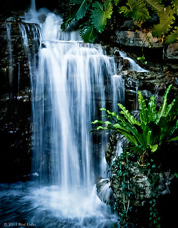 <center><h2>'Tropical Falls'</h2> San Diego, CA  Open edition </center>