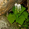 "<center><h2>' First Flower of Spring'</h2> Amicacola Falls,  Dawsonville, Georgia  12""x16"" on 13""x19""  Premium Luster Photo Paper Edition of 25</center>"