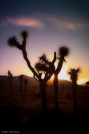 """<center><h2>'Desert Sunset'</h2> Borrago, CA  12""""x16"""", Luster paper (12 mil) Open edition </center>"""