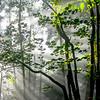 "<center><h2>' Forest Morning Glow '</h2> Gibbs Gardens Ballground GA  Matted 16""x20"", on Luster Photo paper (12 mil)</center>"