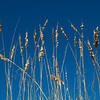 <center><h2>'Sea Oats at Noon'</h2> St Augustine Beach, FL  </center>