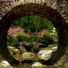 """<center><h2>""""Full Moon Bridge""""</h2>   University of Arkansas Gardens Hot Springs, AR  12""""x14"""" on 13""""x19"""" Luster Paper"""