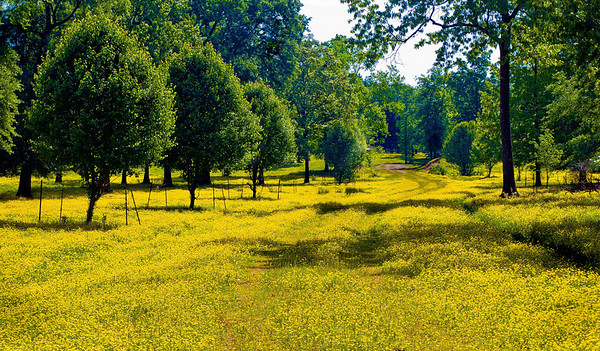 "<center><h2>""Yellow Trail""</h2>   Lake Hamilton Hot Springs, AR"