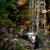 "<center><h2>""Azalia Grotto""</h2>   University of Arkansas Gardens Hot Springs, AR  12""x14"" on 13""x19"" Luster Paper"
