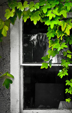 "<center><h2>Ivy Window</h2>Hendersonville, NC  12""x16"" on 13""x19""  Premium Luster Photo Paper Edition of 25</center>"
