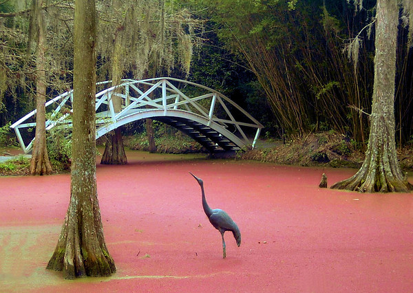 <center><h2>'Pink Swamp'</h2> near Charleston, SC</center>