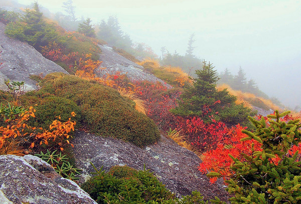 <center><h2>'Color in the Fog'</h2>   Grandfather Mountain, NC</center>