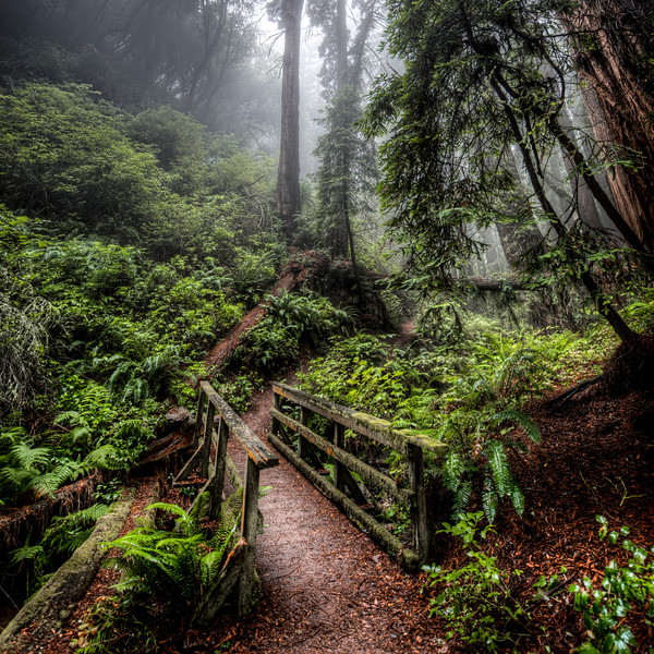 the mossy path   marin county