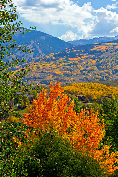 A Blaze of Aspen from My Deck