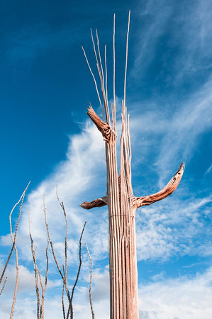 Shell of a cactus, reaching up toward the sky.
