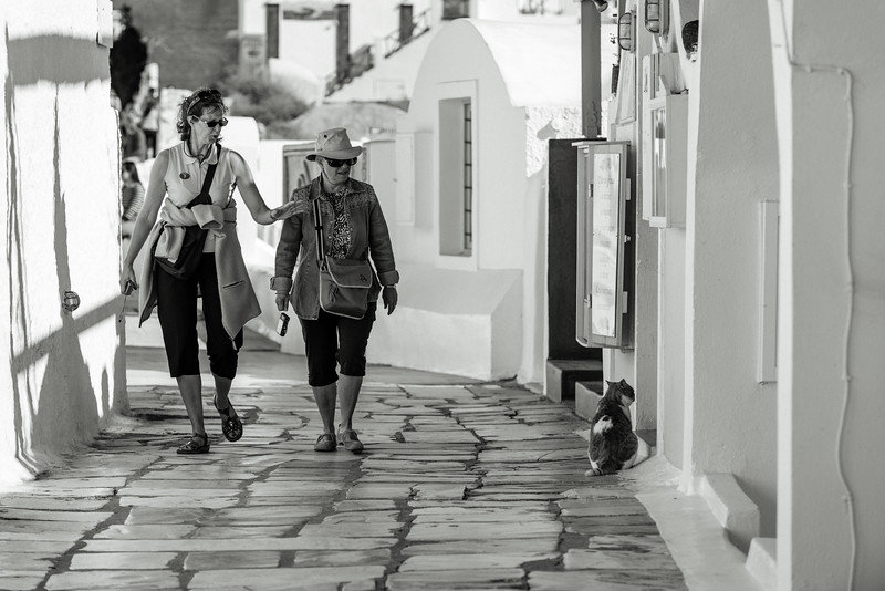 Santorini Oia Street Cat Ladies