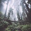 steep ravine viii | marin county, california