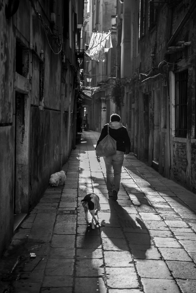 Venice Back Alley Dog Walker