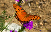 Butterfly in the Huffington Gardens in California