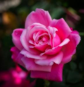 Zilker Garden Flowers