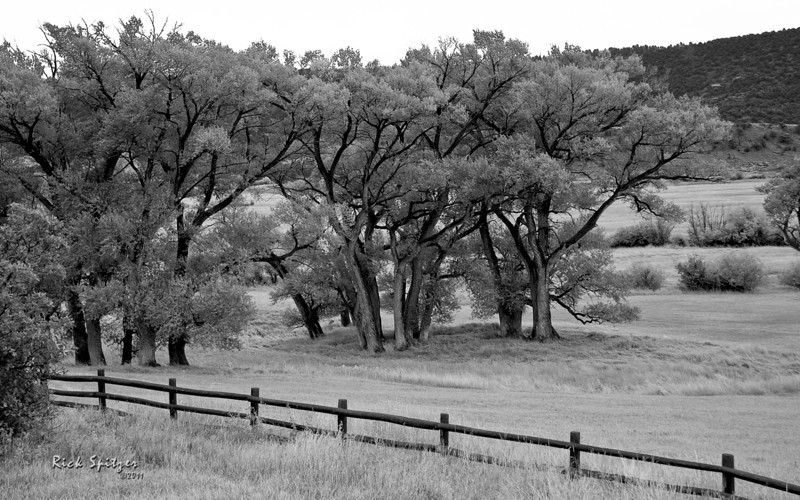 Trees on a Ranch Close to Dallas Divide Near Ridgway.