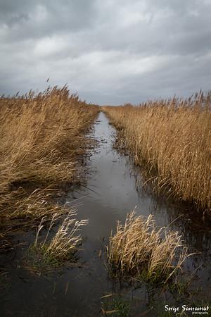 Nieuwkoopse plassen, Netherlands