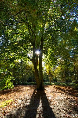 Houdringhe bossen, De Bilt, Netherlands
