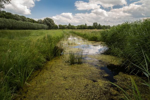 Bieschbos, Netherlands