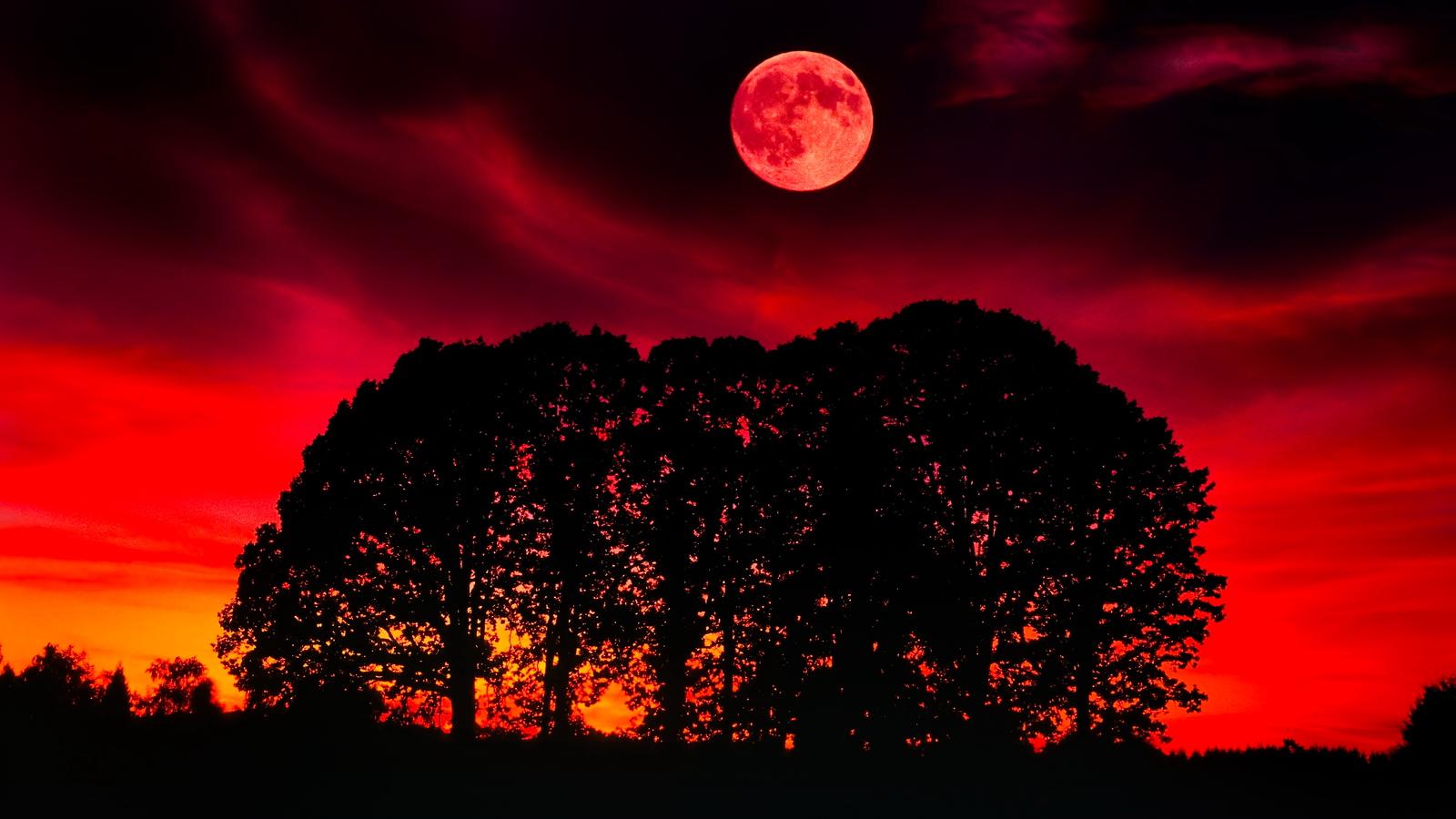 Oak Tree Moonset/sunset