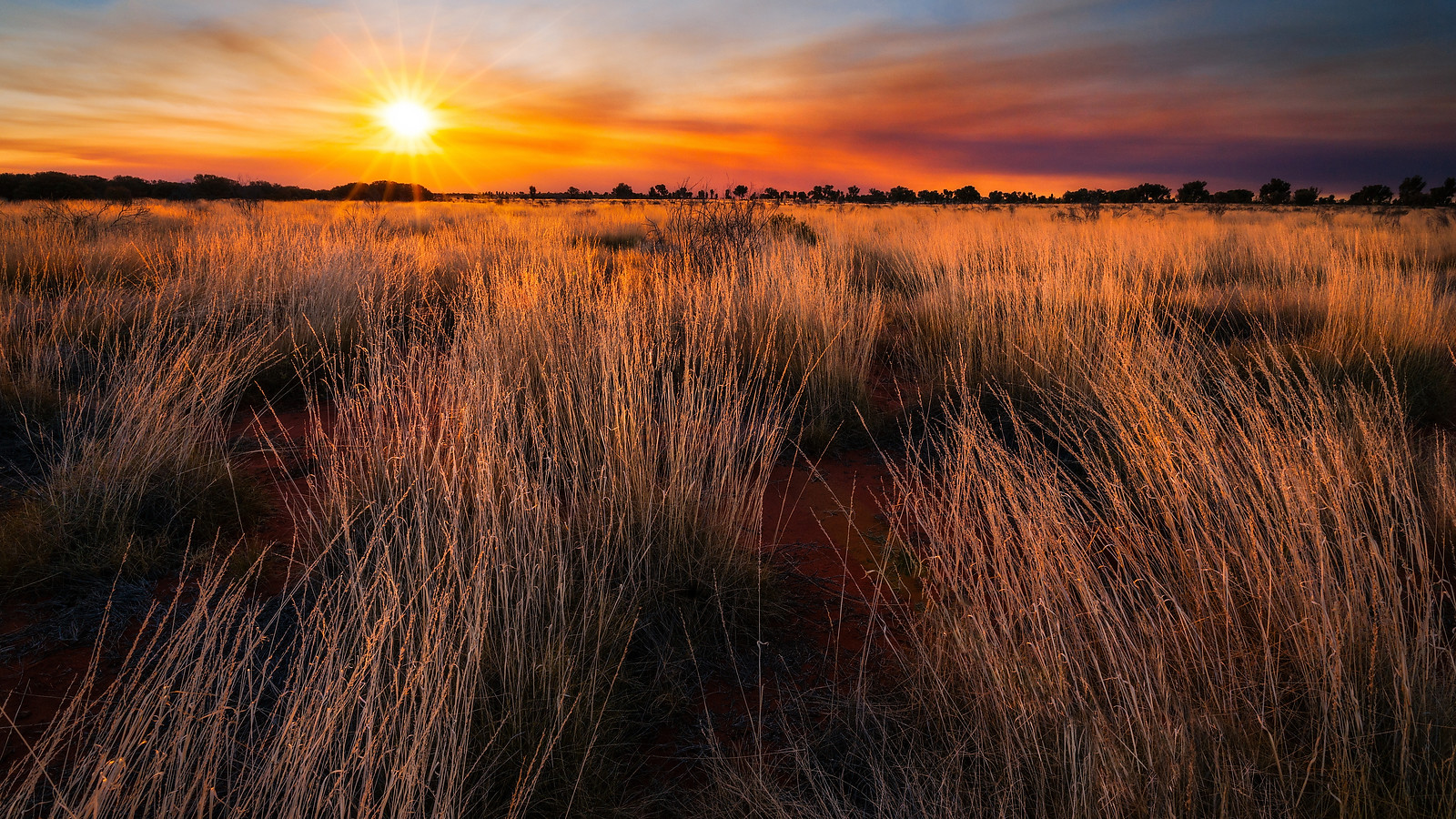 Bush-fire, Spinifex sunset and sunstar. Uluru-Kata Tjuta national park, Australia