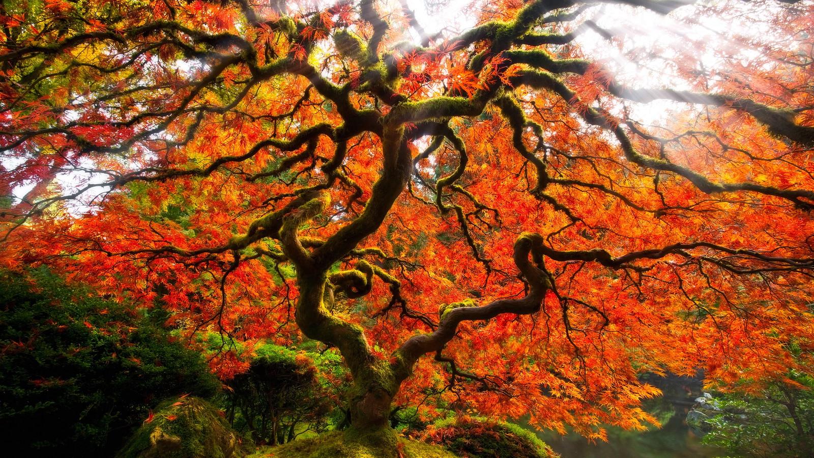 The Serpent Tree