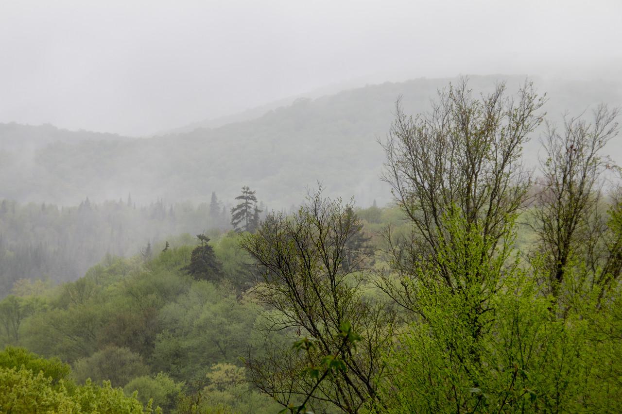 Hillside, Spring 2