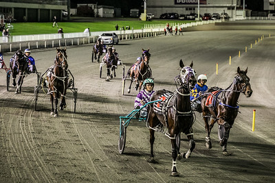 Trots at Gloucester Pak in Perth