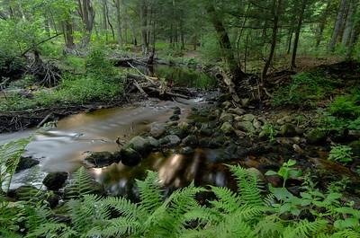 Painted Fern, Rushing Stream