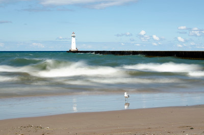 Painted Waves, Still Gull