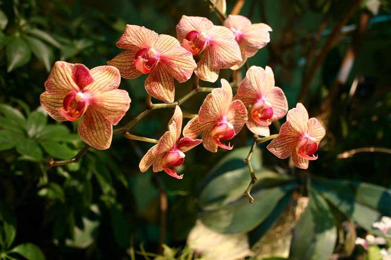 Orchids - Museum Of Natural History, Smithsonian - Washington, DC